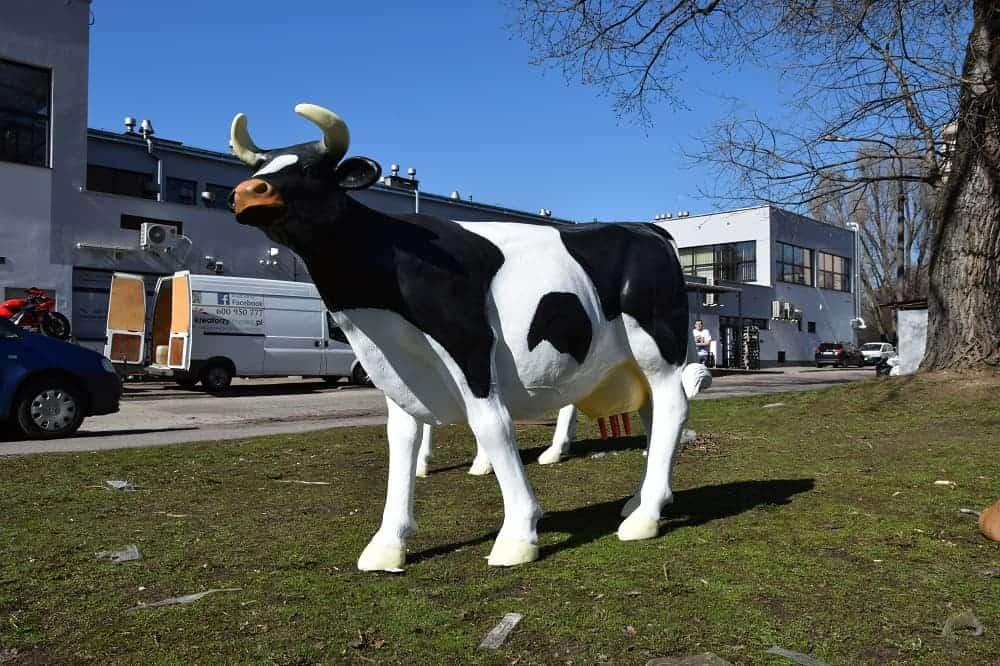 krowa-mucka Sztuczna krowa do dojenia